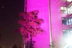 Iluminação Outubro Rosa - São Paulo